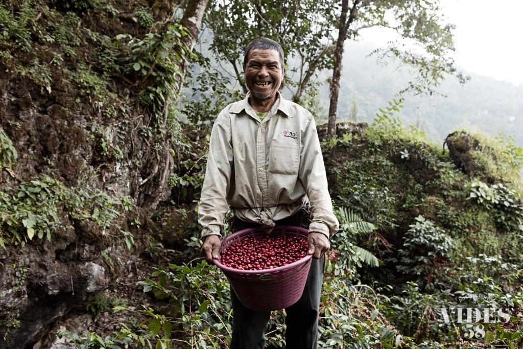la-mochilita-1-harvester